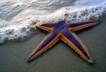 Bintang  / Not all stars belong to the sky, I have mine...
