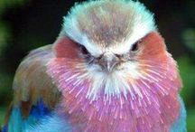❤ BIRDS