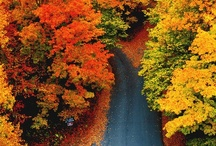 ♥ Autumn colors , Decorations and Recipes. / One of my favorites seasons.