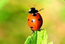 ❤  Lady Bugs