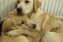 Good dog / by angela malone