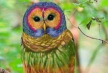 ❤️ Owls