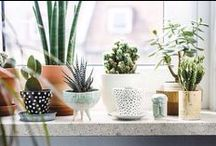 Interior Spaces / Plants add just the right touch to bring an indoor space to life. Look on to find inspiring ways to add plants to your home.