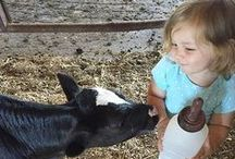 Cabot Instagram <3 / Follow Cabot on Instagram for cows, kids, and yumminess.