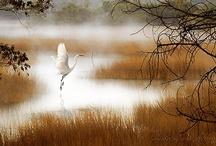 Misty / by Leslie Boudreau