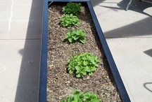 Outdoor Planting for Businesses