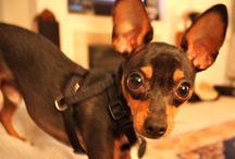 Pretty Pretty Puppy / by Kasey Sherburne