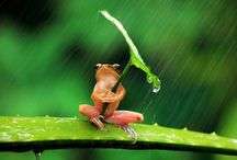 FROGS / Natures Barometers  / by MaryAnne Rether