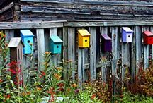 BIRDHOUSE COLLECTOR / Like Them All / by MaryAnne Rether