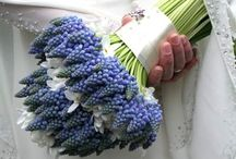 GRAPE HYACINTH / Muscari, Harbinger Of Spring / by MaryAnne Rether