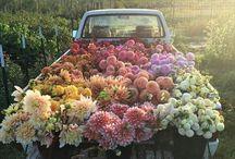 Flower Dreams