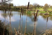 Beautiful Lakes at Meadow Lakes