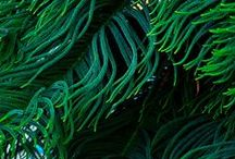 vegetal texture