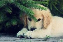 It's So Fluffy I'm Gonna Die! / by Kristen Pitsenbarger