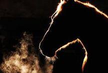 Horse! / by Kristen Pitsenbarger