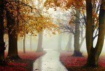 Beautiful places / <3 / by Natayd loz
