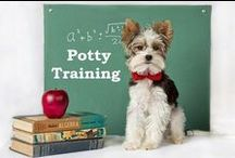 How to potty train a puppy / Potty training a puppy can be very time consuming and extremely frustrating. The Puppy Apartment is a one bedroom, one bathroom home that teaches and trains your puppy/dog to always go potty in their own indoor doggie bathroom. Please visit our website for more details: ModernPuppies.com