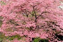 Деревья / Деревья берут свою силу и мощь из земли ,вспомни -ты тоже живёшь на планете Земля.