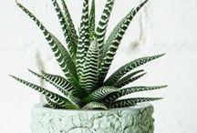 Pflanzen * Plants