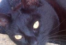 Mad Cat Lady