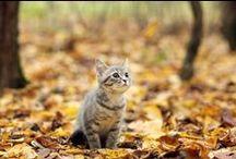 Cats / Roar! Tigers, lions, jaguars, leopards and house cats!