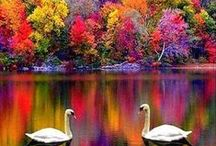Nature Photography & Art / Beautiful artistic images of nature, wildlife, animals and landscape.