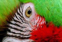 Birds_Parrots / by Pierrette Lavoie