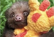Sloths, Anteaters, Armadillo