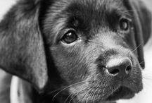 DOGS ♥ / Cuteeeeee *.* ♥