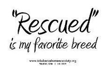 RESCUE : DOGS & CATS ... / ...Horses... / by C L A U D I A