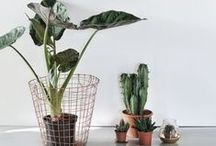 Домашние растения / Plants