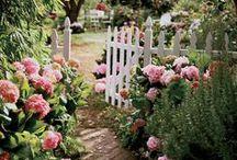 Gardens / lovely gardens, home, outside, flowers