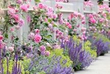 Gardens, Flowers and Landscaping / Beautiful yards