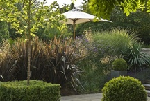 Form and Foliage / A modern garden of decked and paved terraces leading across a lawn to a boardwalk through lush foliage planting at the end of the garden adjacent to a stream