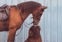 Horse passion❤️ / Idee intelligenti e interessanti