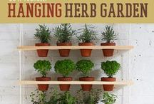 Gardening   Advanced Survivor / Discover the art of planning, planting, growing and harvesting your own vegetable garden.