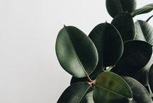 INDOOR JUNGLE / #Deco / plante d'intérieur / interior jungle #greenhome