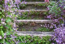 gardening / by Stephanie Hammond Cook