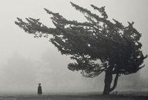 alberi - trees