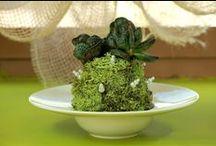 houseplants / creo e vendo idee regalo con piante fiorite, piante verdi, kokedama, composizioni d'arredo.