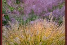 le graminacee / I meravigliosi effetti cromatici delle graminacee da giardino