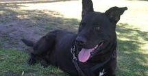 Be a Voice. Adopt a Dog. / Save a life, adopt a dog.  beavoiceadoptadog@gmail.com