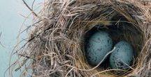 « Egg art » / L' #art dans toute sa splendeur.