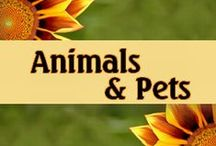 Animals and Pets / It's all about the animals.  Great pet information, as well as cute animal pictures!