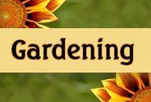 Gardening / All kinds of gardening found on this board!  Backyard gardening, square foot gardening, container gardening, indoor gardening, verticle gardening and much more!