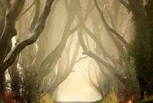 Spirit of the Forrest