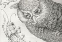 Owls / I love owls, lovely pictures drawings and ideas
