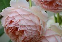 Beautiful garden plants / by Pola Madej