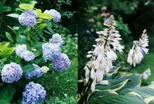 From my gardening blog