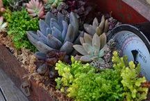 Planting ideas / Garden planting